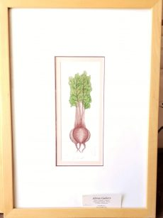Beets by Barbara Tidwell